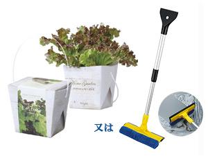レタス栽培キットまたはワイパープレゼント